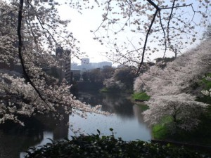 九段下の桜
